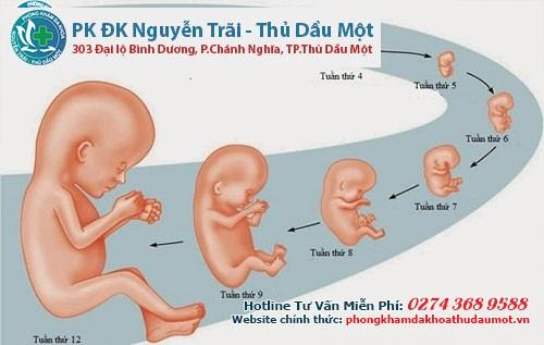 Sự phát triển của thai nhi trong những tuần đầu tiên