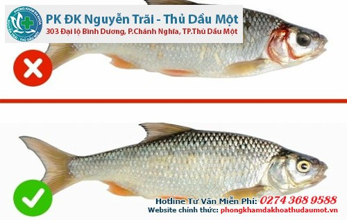 Cách lựa chọn cá tươi đúng cách